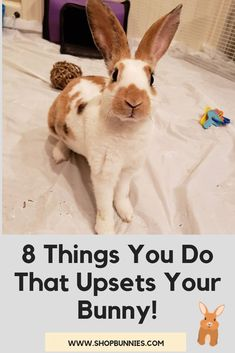 Rabbits are very social animals; Here are the best tips to teach you about bunny care! Bedding ideas, treats and toys for your bunny and other great diy boredom busters! Diy Bunny Cage, Diy Bunny Toys, Bunny Cages, Rabbit Cages, Rabbit Hutch Indoor, Indoor Rabbit Cage, Indoor Rabbit House, Pet Bunny Rabbits, Pet Rabbit