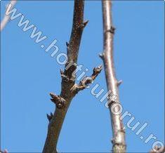 stropirea pomilor iarna Fruit Trees, Grape Vines, Gardening, Agriculture, Plant, Life, Lawn And Garden, Vines, Horticulture
