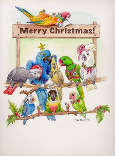 Items similar to BLANK Merry Christmas or Season's Greetings 2015 card with parrot artwork on Etsy Aussie Christmas, Australian Christmas, Merry Christmas Greetings, Christmas Greeting Cards, Loro Real, Homemade Hummingbird Food, Funny Parrots, African Grey Parrot, Parrot Toys