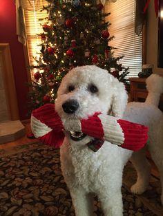 Christmas Poodie