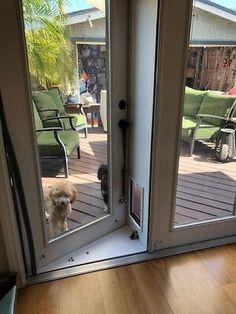 Modern Pet Doors, Pet Screen Door, Patio Door Screen, Patio Dog Door, Window Pet Door, French Doors Patio, French Doors With Screens, Pet Gate, Rottweiler Puppies