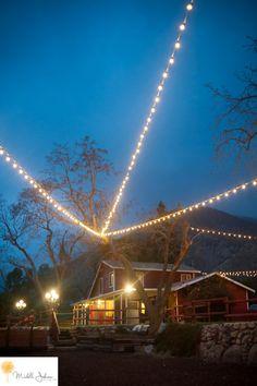 Sweet Pea Ranch Photo By Michelle Johnson Photography -Barn Wedding, Market Lights