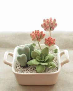 succulent garden care Succulents the Right Way adorable succulent set-up cultivando_flores_plantasadorable succulent set-up cultivando_flores_plantas Succulent Care, Succulent Gardening, Succulent Pots, Container Gardening, Succulent Garden Ideas, Mini Cactus Garden, Garden Soil, Garden Plants, Repotting Succulents