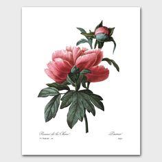 Botanical Print Peony Art French Cottage Bedroom Wall