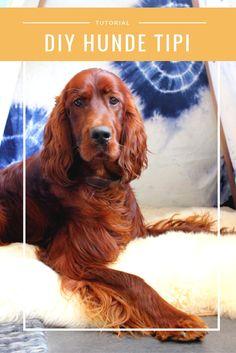 #Tutorial um ein #Tipi für #Hunde selber zu machen... #DIY made by #Hundeblog haus