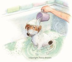 Sid and the Cwm Hendy Dog Show - Petra Brown, Children's Book Illustrator