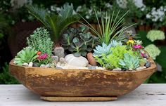 Succulents in an old antique dough bowl