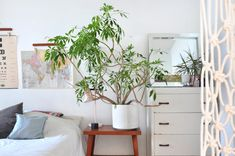 One Simple Thing You Can Do This Weekend for Happy Houseplants All Year Long — Weekend Projects