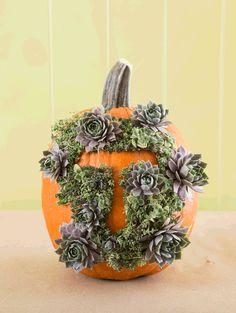 The House That Lars Built.: Succulent monogram pumpkin