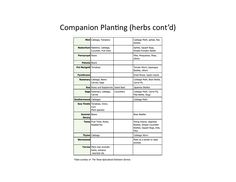 Interplanting (Companion Planting) for Pest Control and Healthier Gardens « Home Grown Edible Landscapes