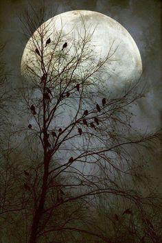 Aves que cantan en la oscuridad.