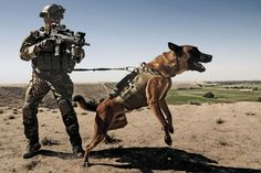 Military Special Forces in Dogs | German KSK Assaulter with military working dog