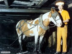 Pit pony and handler at work, Murton Colliery, County Durham, England. - 1970s