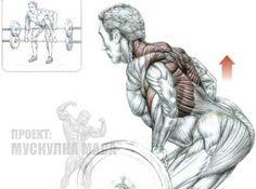 Гребане от наклон е сред най-добрите упражнения за гръб, които увеличават мускулната маса и сила.