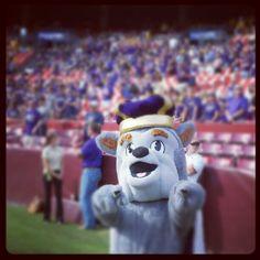 Duke Dog's ready, are you #JMUDukes? #jmuwvu
