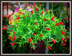 chillies by George  on 500px