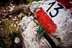 Mountain Life - flowers on the path  #landscape #dolomiti #mountain #valgardena