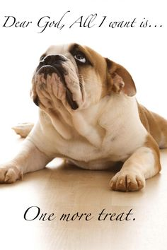 Will have a bulldog one day.