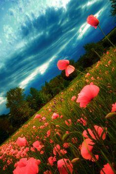 Beautiful #paysage #fleurs