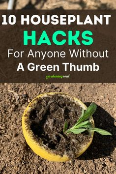 Check out these great gardening hacks. #gardeninghacks Healthy Environment, Go Green, Houseplants, Gardening Tips, Green Beans, Things To Come, Vegetables, Food, Check