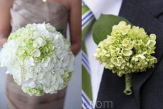 Light-Green-Hydrangea -- This is what I'd love to have!