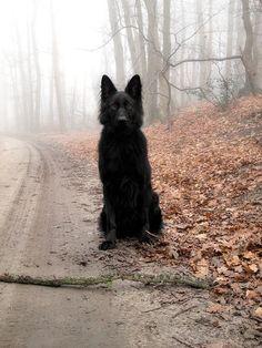 Found the big bad wolf