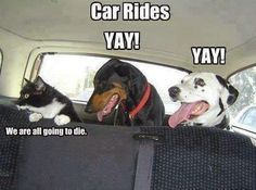Funny pictures about How animals see car rides. Oh, and cool pics about How animals see car rides. Also, How animals see car rides. Cute Funny Animals, Funny Cute, Funny Dogs, Funny Shit, Funny Memes, Funny Videos, Dog Memes, Funny Stuff, Funniest Memes