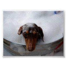 My dog loves baths too