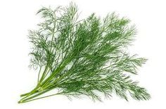 What is dill? Cooking with dill. Health benefits of dill. Home Remedies For Diarrhea, Cold Home Remedies, Natural Home Remedies, Natural Healing, Health Heal, Health And Wellness, Bone Health, Home Grown Vegetables, Sun