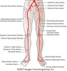 Registered Vascular Diagrams - Block And Schematic Diagrams •