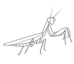 Praying Mantis coloring page from Praying mantis category. Select from 24848 printable crafts of cartoons, nature, animals, Bible and many more.