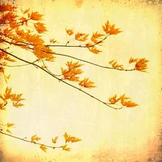 Honey gold photography, amber, fall decor, maple leaves, autumn tree nature print tree bronze bamboo forest wall art by bomobob Forest Art, Autumn Forest, Autumn Trees, Autumn Leaves, Maple Leaves, Autumn Art, Fine Art Photo, Photo Art, Orange Leaf