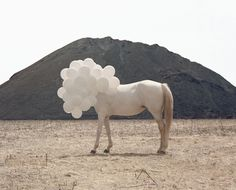 New York based photographer Andrea Galvani seems to find the perfect balance between whimsical and desolate in her imagery, the artistry of her work is phenomenal.