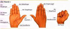 Die Hand | Deutsch