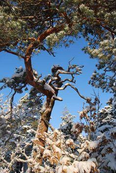 Do you see the treedragon? Hällesdalen, Stenungsund - Sweden