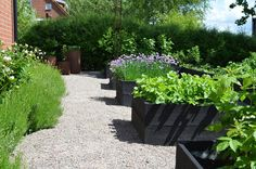 If you were looking for (modern garden design), take a look below Edible Garden, Garden Beds, Vegetable Garden, Farm Gardens, Outdoor Gardens, Raised Planter, Modern Garden Design, Garden Planning, Garden Inspiration