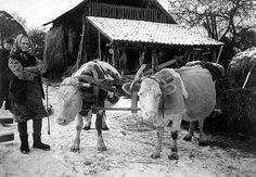 Szabadságharctól a világháborúig | Száz Magyar Falu | Kézikönyvtár