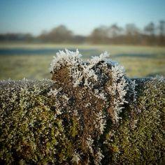 Hartje van mos, sneeuw en ijs in hek in eiland...