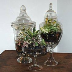 My sister got me going on making Terrariums. Thrift shop for the containers.....so much fun....layer rocks, moss if you like or sand. another layer of rock,then your potting soil. The layers are really up to you....just make sure you have good drainage at bottom and plenty of soil for plant to grow....I am planting mostly succulents.......really lifted my spirits during some gloomy days...