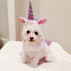 Yes, you found your costume, but your furry pal may be at wits' end trying to find his or hers!