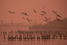 Hula Valley we counted 28,080 Cranes at the park