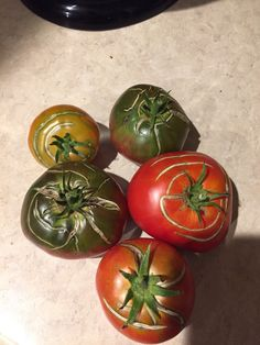 Why do my tomatoes look like this?? #gardening #garden #gardens #DIY #landscaping #home #horticulture #flowers #gardenchat #roses #nature