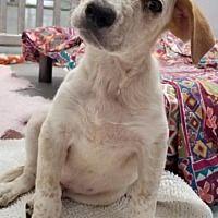 Pet Card Pets Kitten Adoption Dogs