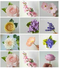 Jacqueline Butler | sugarflowers