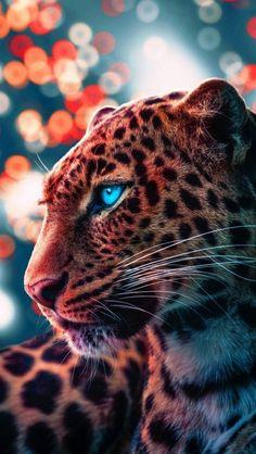 Cheetah Magical Eyes IPhone Wallpaper - IPhone Wallpapers