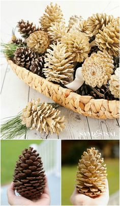 How to Make Beautifully Bleached Pinecones is part of Fall decor Pinecones - Learn how easy and inexpensive it is to make beautifully bleached pincones for your fall, Christmas, or holiday decor and crafts Fall Crafts, Decor Crafts, Holiday Crafts, Wood Crafts, Holiday Decor, Primitive Crafts, Paper Crafts, Primitive Snowmen, Diy Crafts