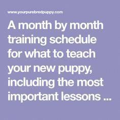 A month by month training schedule for what to teach your new puppy, including the most important lessons puppies should learn. A month by month training schedule for what to teach your new puppy, including the most important lessons puppies should learn. Puppy Schedule, Puppy Training Schedule, Training Your Puppy, Dog Training Tips, Training Classes, Potty Training, Training Pads, Training Collar, Training Videos