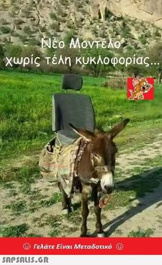 Funny Greek Quotes, Funny Quotes, Kai, Horses, Sayings, Animals, Pictures, Humor, Funny Phrases