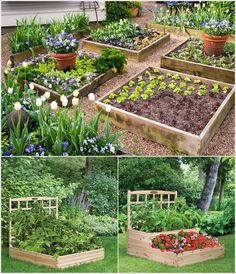 Wonderful Wooden Raised Beds.  Cool layout but needs to be edible