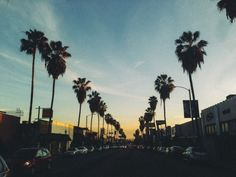 Palm trees lead the way.